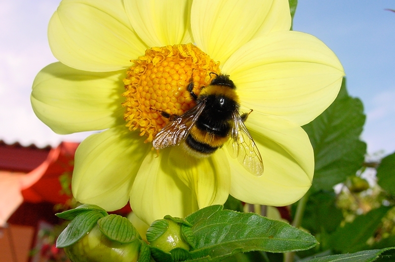 Solutii naturale pentru polenizare